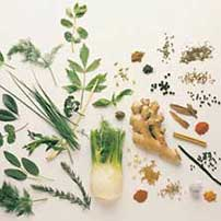 A-Z of Medicinal Herbs and Spices