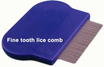 fine toothed lice comb