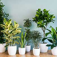 Air-purifying House Plants